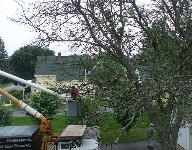 We can handle any tree - live, dead or half way in-between