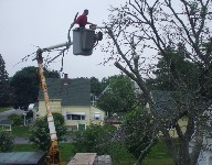 Our crew has extensive experience using our boom-lift truck. This enables us to remove branches carefully.
